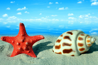 Seashell and Starfish Wallpaper for Android, iPhone and iPad