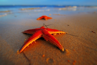 Free Seastar Picture for Android, iPhone and iPad