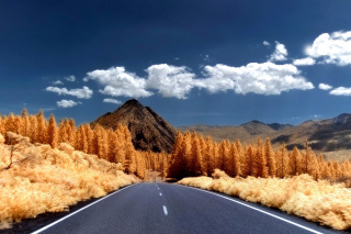 Autumn Road Background for Android, iPhone and iPad
