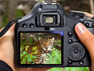 Screenshot №1 pro téma Jungle Spotting 320x240