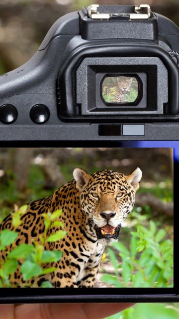 Screenshot №1 pro téma Jungle Spotting 360x640