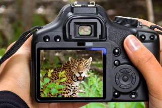 Jungle Spotting Background for Android, iPhone and iPad