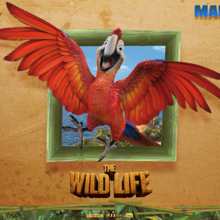 The Wild Life Cartoon Parrot - Fondos de pantalla gratis para iPad 2