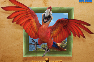 Free The Wild Life Cartoon Parrot Picture for Android, iPhone and iPad