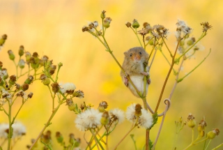 Kostenloses Little Mouse On Flower Wallpaper für Android, iPhone und iPad
