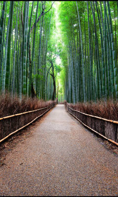 Screenshot №1 pro téma Bamboo Forest Arashiyama in Kyoto 240x400