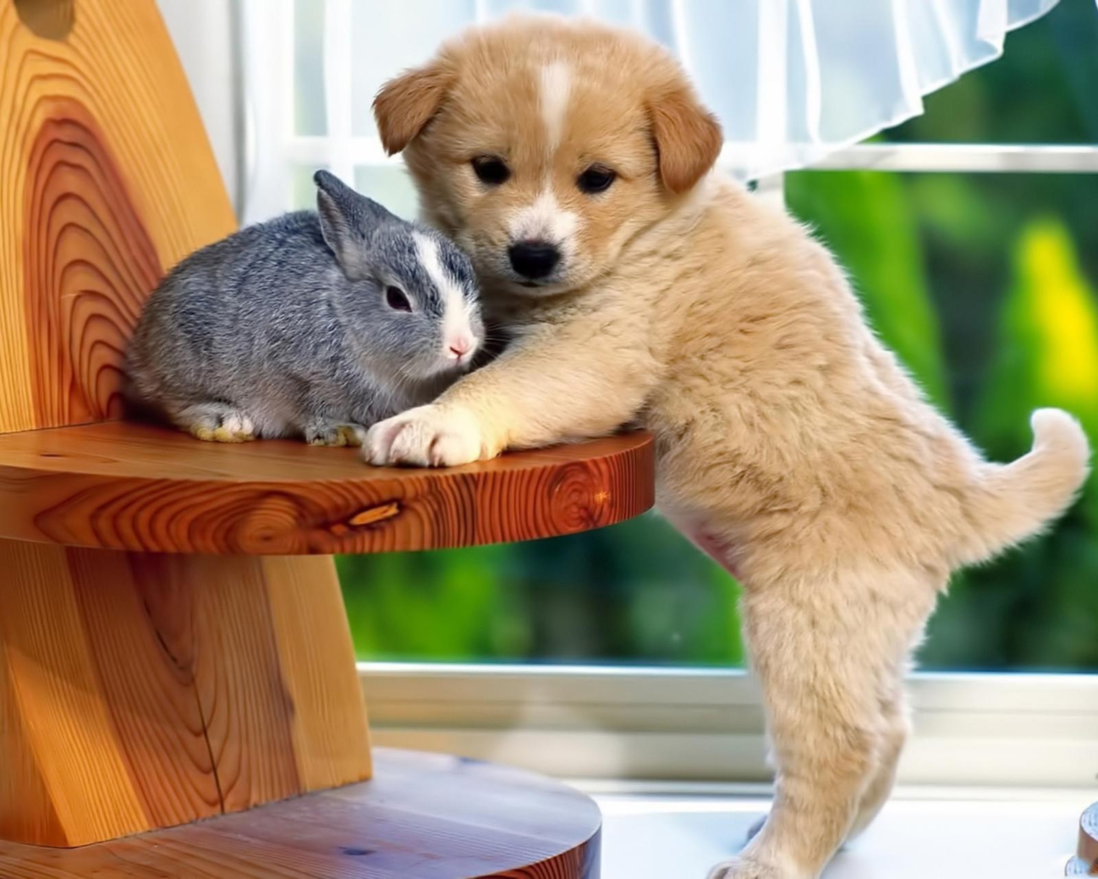 Картинки для телефона с котята и собаки