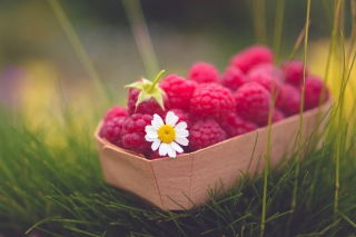 Raspberry Basket And Daisy Background for Android, iPhone and iPad
