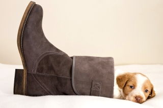 Puppy in Boot Wallpaper for Android, iPhone and iPad
