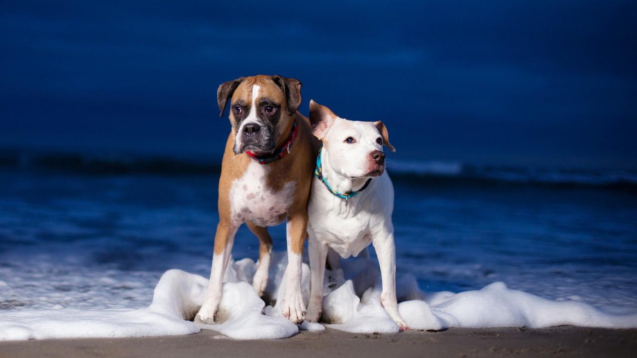 Dogs On Sea Coast
