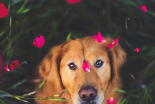 Free Dog And Pink Flower Petals Picture for Android, iPhone and iPad