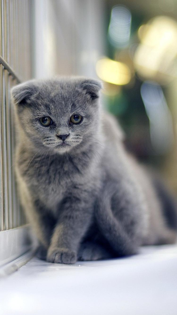 Котята фото для айфона
