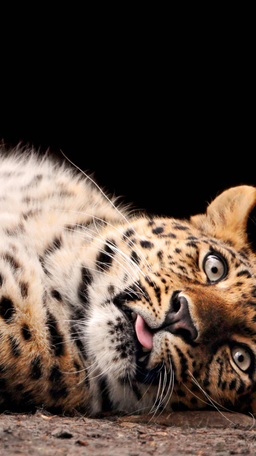 Картинки животные на телефон хуавей, оригинально