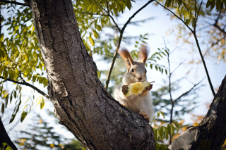 Free Squirrel sits on tree bark Picture for Desktop 1280x720 HDTV