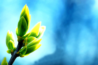 Spring Bud Wallpaper for Android, iPhone and iPad