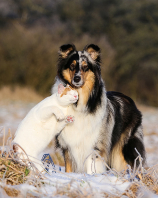 Friendship Cat and Dog Collie - Obrázkek zdarma pro 640x960