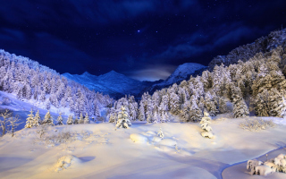 Forest In Winter - Fondos de pantalla gratis