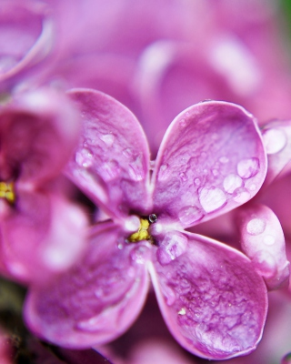 Macro Purple Flowers Background for Nokia C7