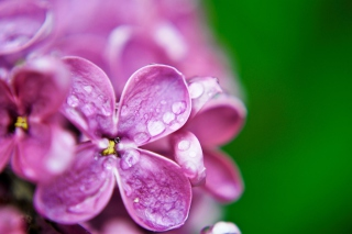 Macro Purple Flowers Picture for Android, iPhone and iPad