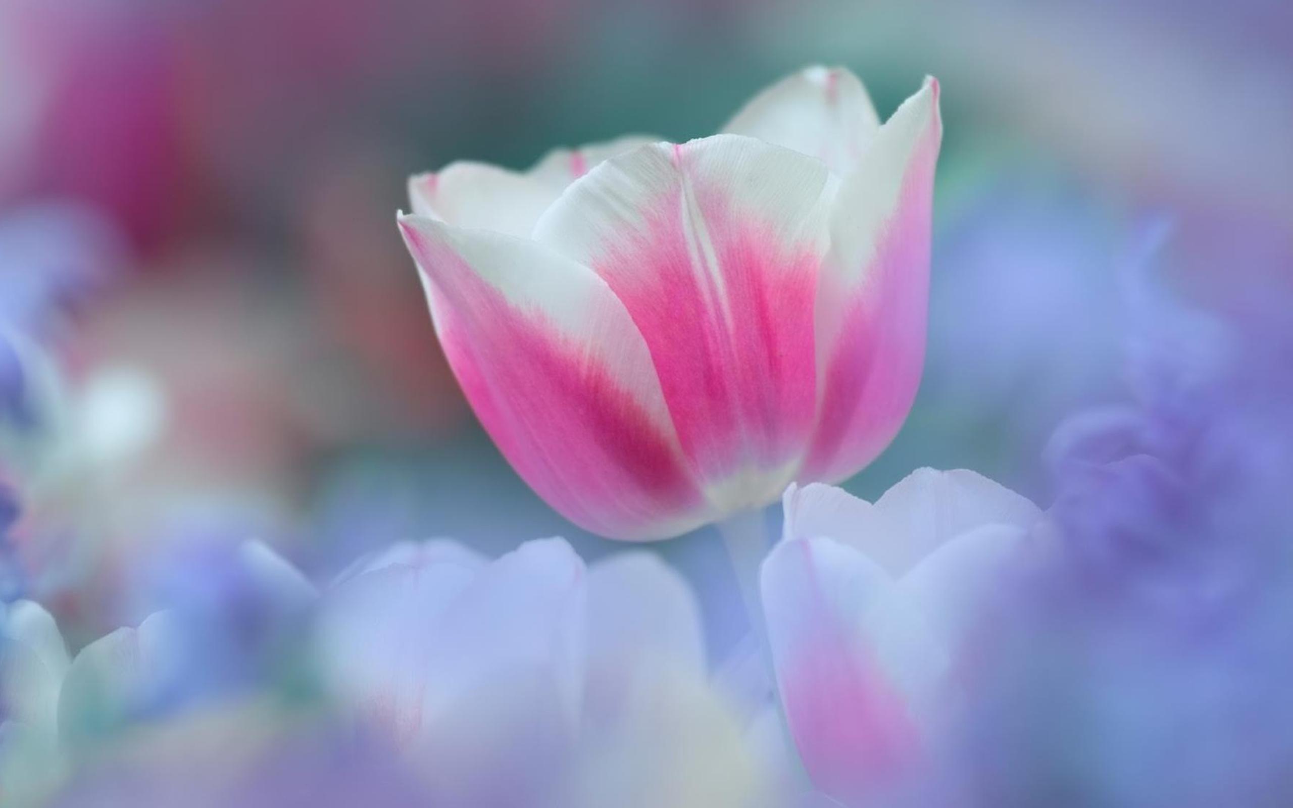 нежно-розовые цветы бесплатно
