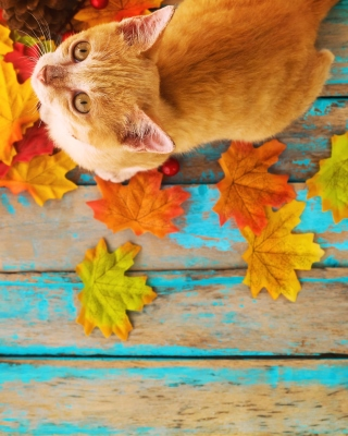 Autumn Cat Background for 480x640