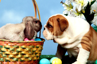 Kostenloses Easter Dog and Rabbit Wallpaper für Android 320x480