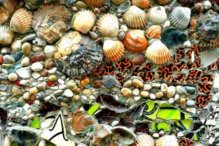 Shells and Pebbles Wallpaper for Android 480x800