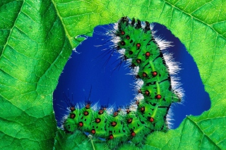 Caterpillar Picture for Android, iPhone and iPad