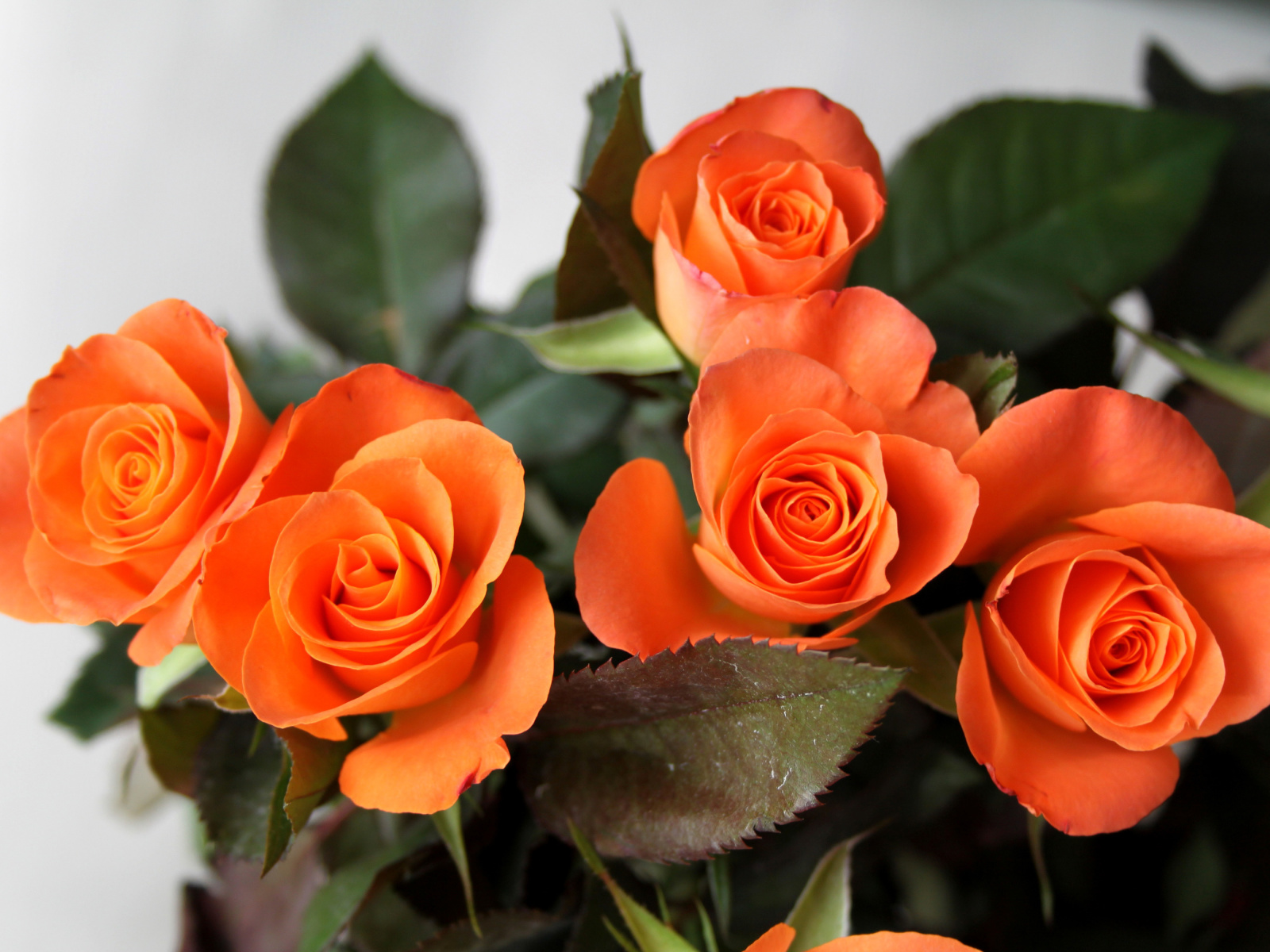 Orange roses screenshot #1 1600x1200