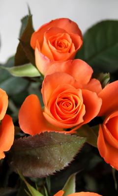 Screenshot №1 pro téma Orange roses 240x400