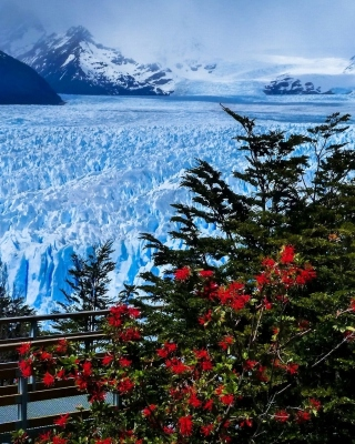 Perito Moreno Glacier Wallpaper for 240x320