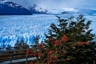 Perito Moreno Glacier Wallpaper for Android, iPhone and iPad