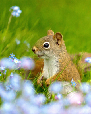 Squirrel in Taiga - Fondos de pantalla gratis para iPhone 4S