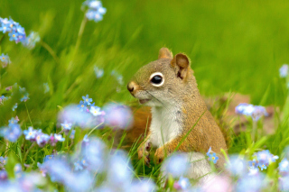 Squirrel in Taiga Wallpaper for Android, iPhone and iPad