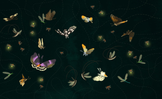 Butterflies Background for Android, iPhone and iPad
