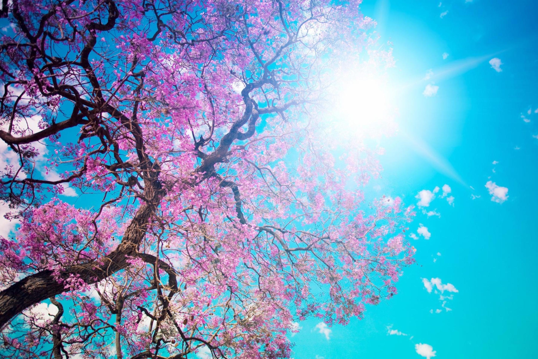 Картинки марта, красивые картинки с весны