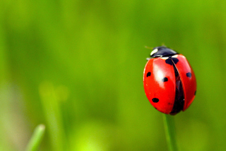 Red Lady Bug Background for Android, iPhone and iPad