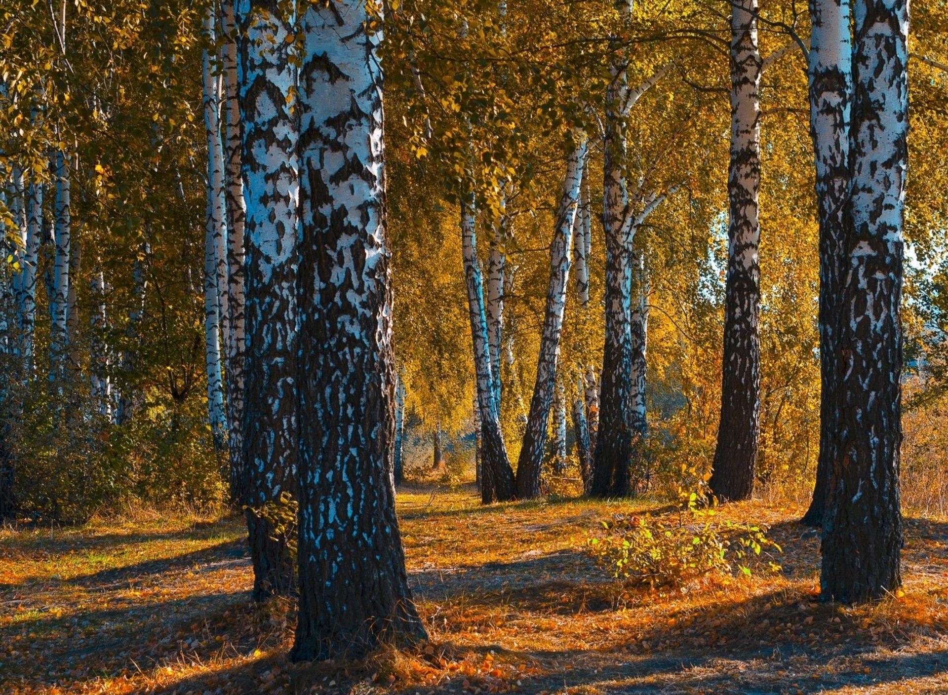 Screenshot №1 pro téma Russian landscape with birch trees 1920x1408