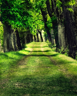 Green Path Background for 480x640