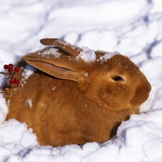 Rabbit in Snow sfondi gratuiti per iPad 3
