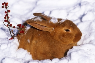 Rabbit in Snow Background for 480x400