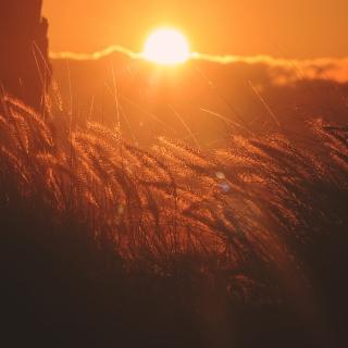 Картинка Sunset Corn на телефон iPad mini