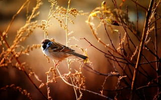 Bird On Branch Wallpaper for Android, iPhone and iPad