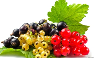 Free Currant Picture for Android, iPhone and iPad