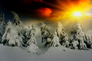 Winter Shine Background for Android, iPhone and iPad