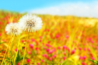Summer Flower Field Wallpaper for Android, iPhone and iPad