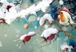 Free Sweet Winter Bird Picture for Android, iPhone and iPad