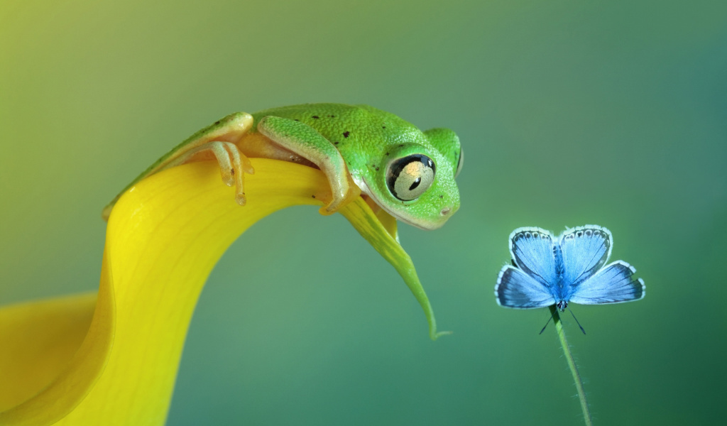 Screenshot №1 pro téma Frog and butterfly 1024x600