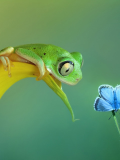 Screenshot №1 pro téma Frog and butterfly 240x320