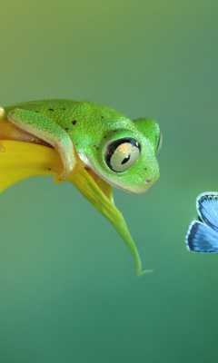 Screenshot №1 pro téma Frog and butterfly 240x400